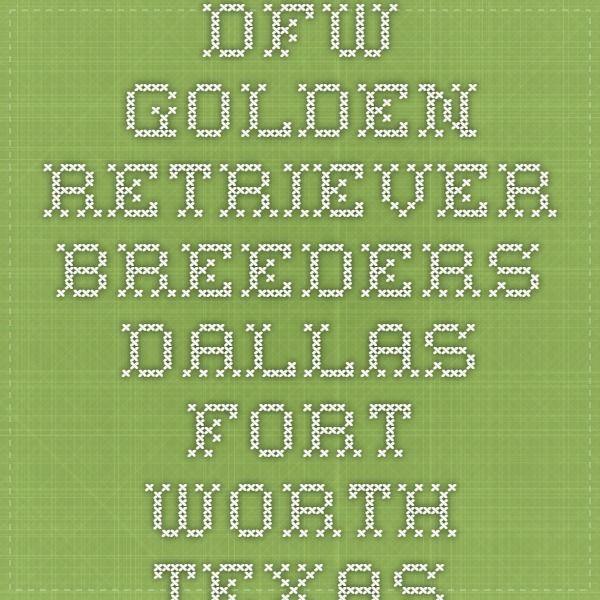 Dfw Golden Retriever Breeders Dallas Fort Worth Texas