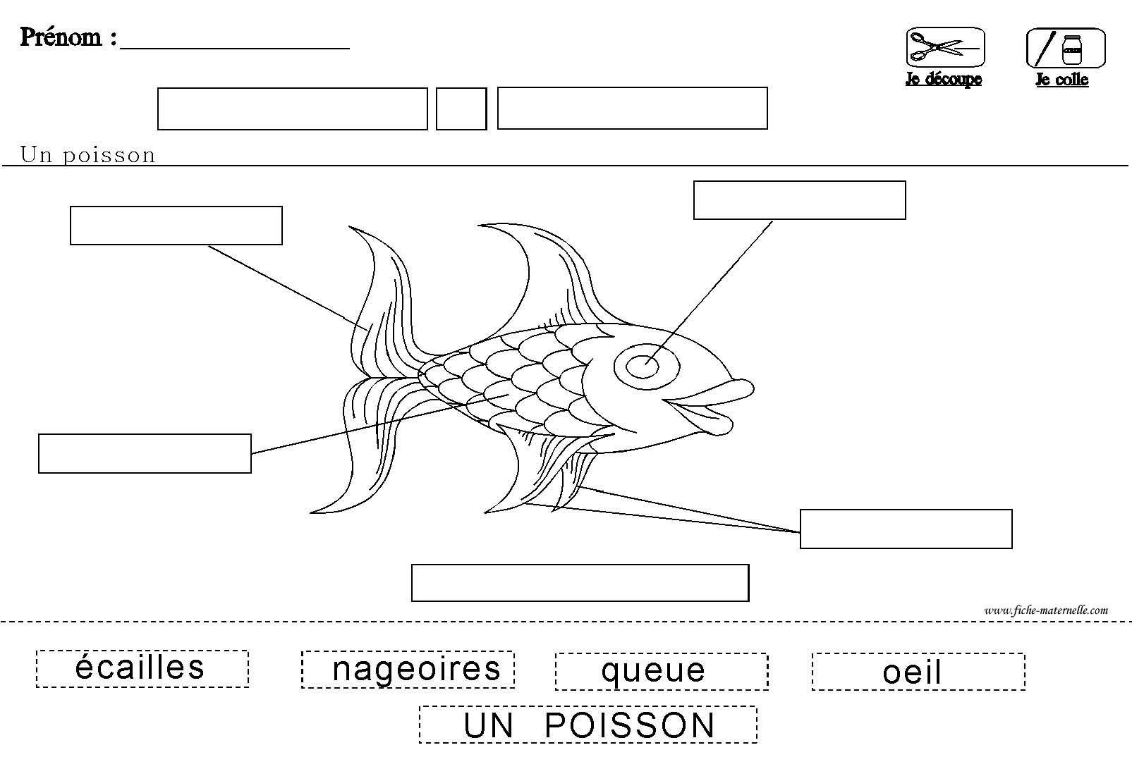 Fiche maternelle sur le poisson et sa physiologie - Le petit poisson rouge maternelle ...