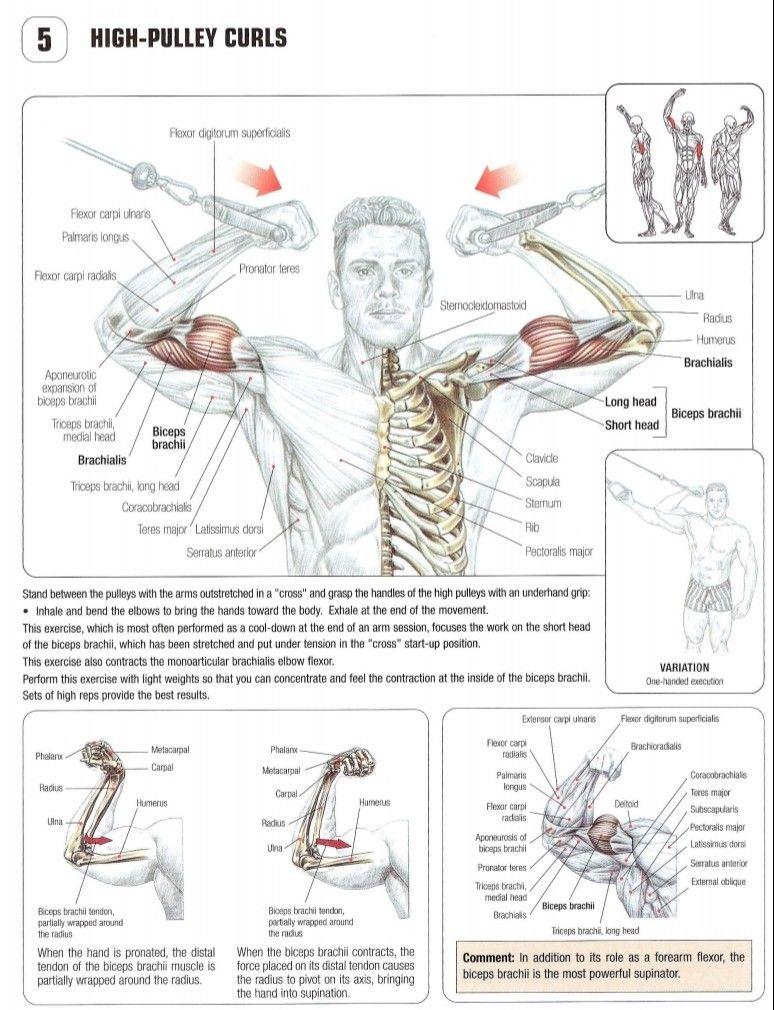 Pin by Ravinderjeet Singh on Straight Training Anatomy - 2nd Edition ...