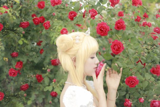 FOREVER SAILOR MOON