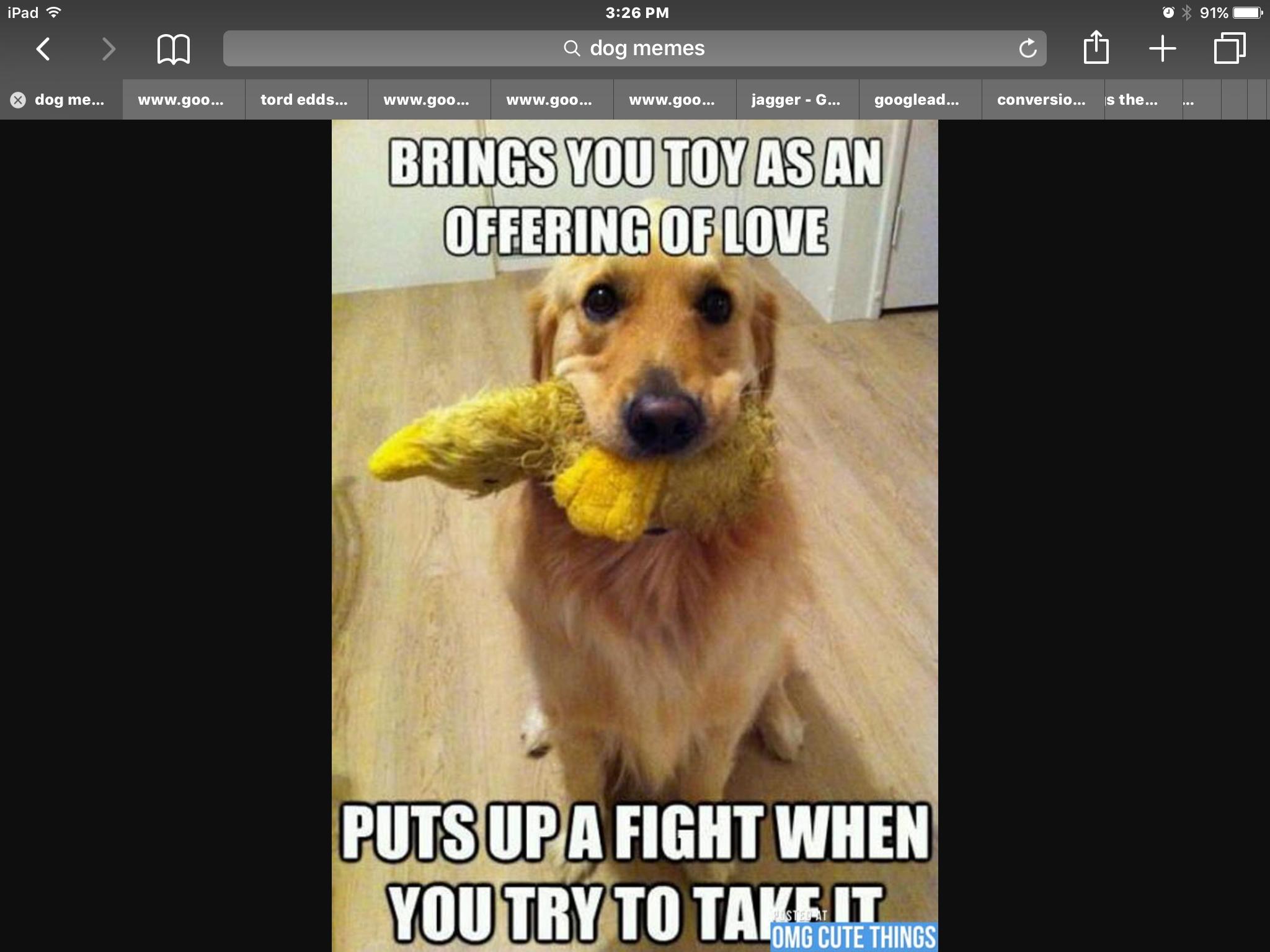 Funny Dog Meme Images : Pin by xdoughnutgirlx 5150 on dog memes pinterest funny animal