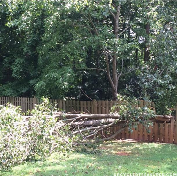 fallen-tree-in-backyard-upcycled-into-wood-slice-wall-art-upcycledtreasures