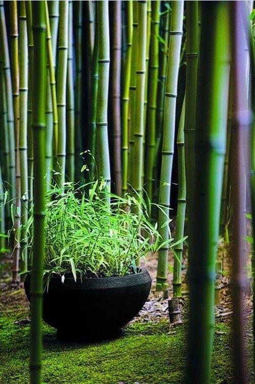 bambus garten selber machen wachsen topf schwarz … | pinteres…, Gartengerate ideen