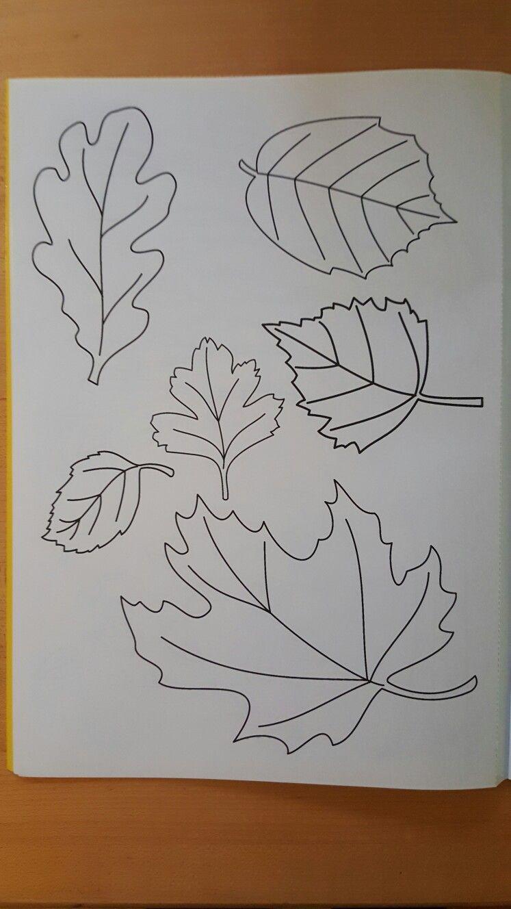 Herbstbl tter malvorlagen template pinterest - Herbstblatter deko ...