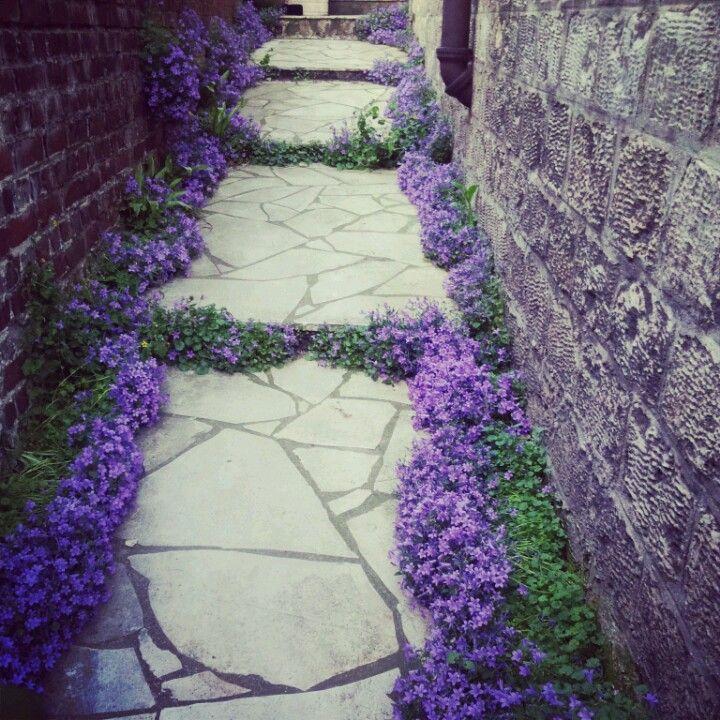 Violet flower . holistic-empowerment.com