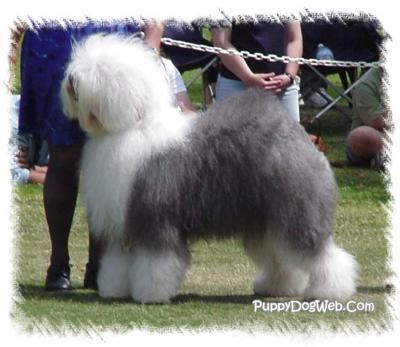 This Is The Dog I Always Wanted When I Was A Little Girl Just