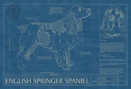 Animal blueprint company english springer spaniel dog print dog animal blueprint company english springer spaniel dog print malvernweather Gallery
