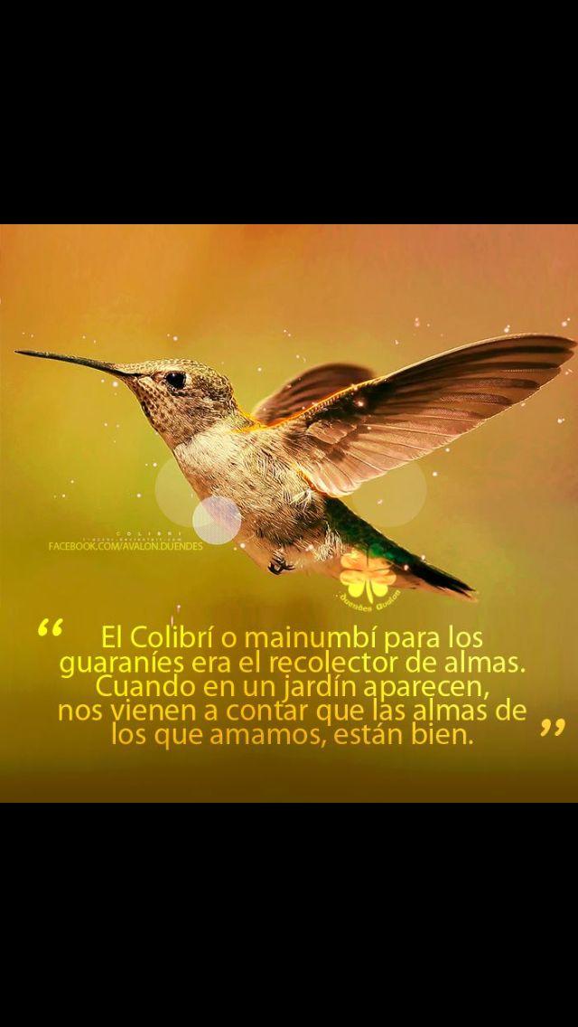Colibrí! | colibríes | Pinterest | Colibri, Jesucristo y Curiosidad