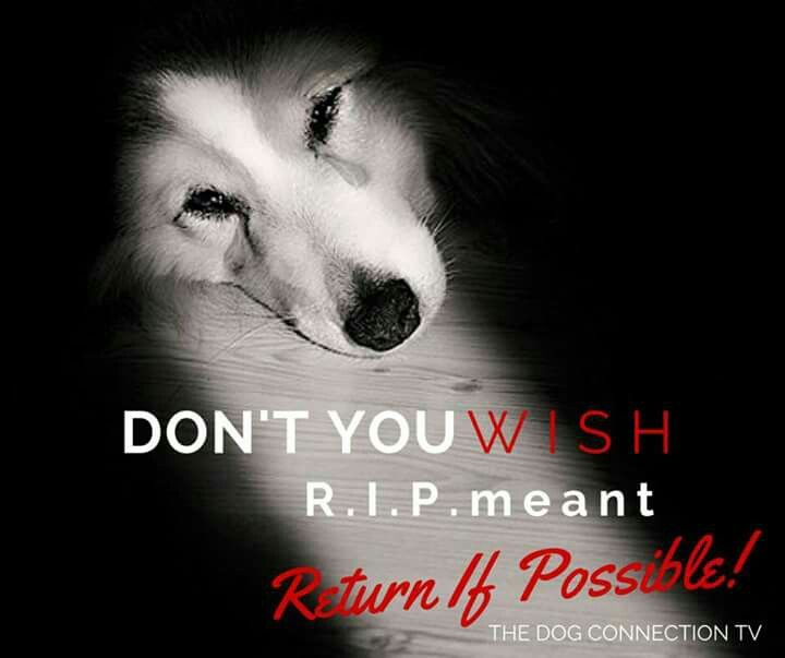 It S So Difficult To Say Goodbye To Someone Who Has Been Such A Loyal And Loving Companion I Sure Wish R I P Rest In Peace M Pet Loss Dog Pet Loss Pet