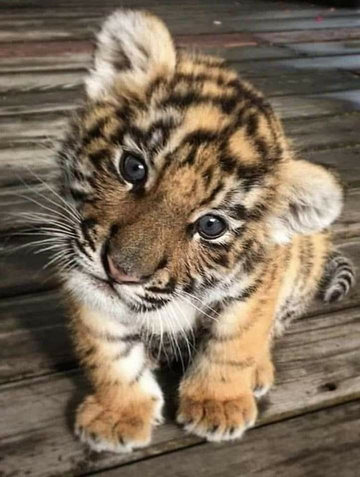 Pin By Aj On Cute Animals Cute Baby Animals Cute Little