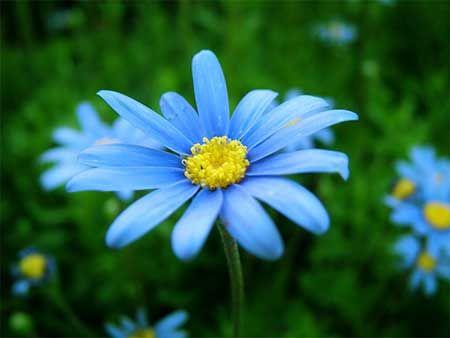41+ Planta con flor azul pequena ideas