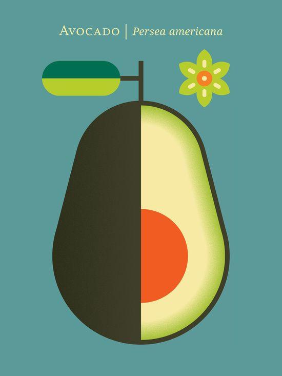 Christopher Dina, Fruit: Avocado Art Print