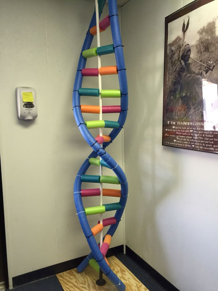 High School Biology Classroom Decorations ~ Dna model constructed of pool noodles by my middle school