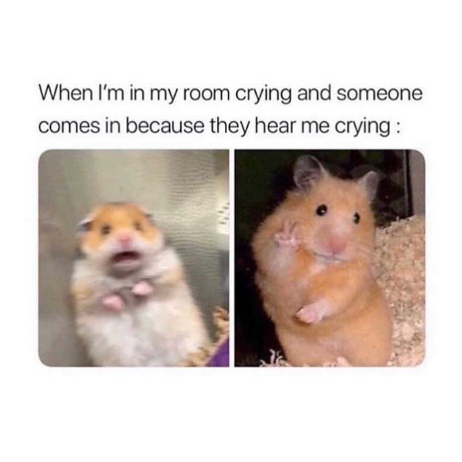 Meme S Quotes Memes Its Memes Laughing Memes Memes Quotes