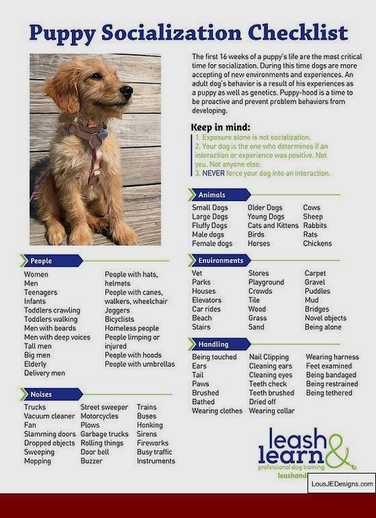 10 Pro Tips For Dog Training By Experts Puppy Socialization Dog Training Obedience Puppy Training