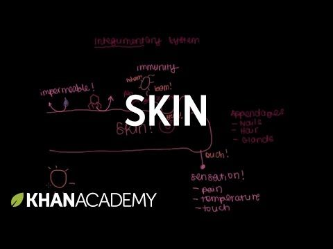 Meet The Skin Overview Integumentary System Introduction