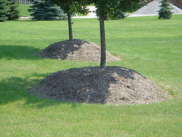 Bark Mulch Mounded Up Around A Tree Trunk Landscaping Around Trees Garden Shrubs Mulch Around Trees