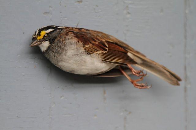 Tragic Images Aim To Raise Awareness About Bird Fatalities Feature Shoot Bird Art Concept Art Characters Bird