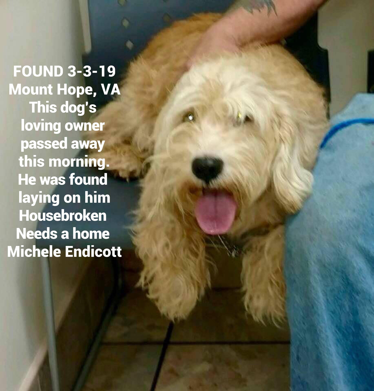 Founddog 3 3 19 Mounthope Va This Dog S Loving Owner Passed