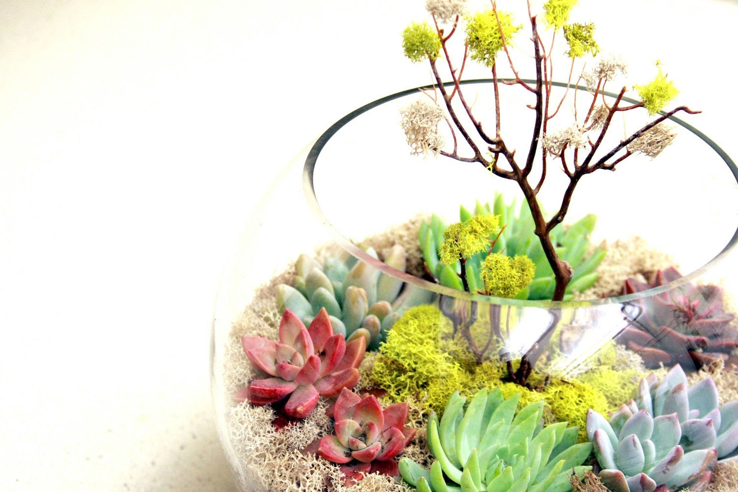 Another world spring fishbowl terrarium w sea whip tree