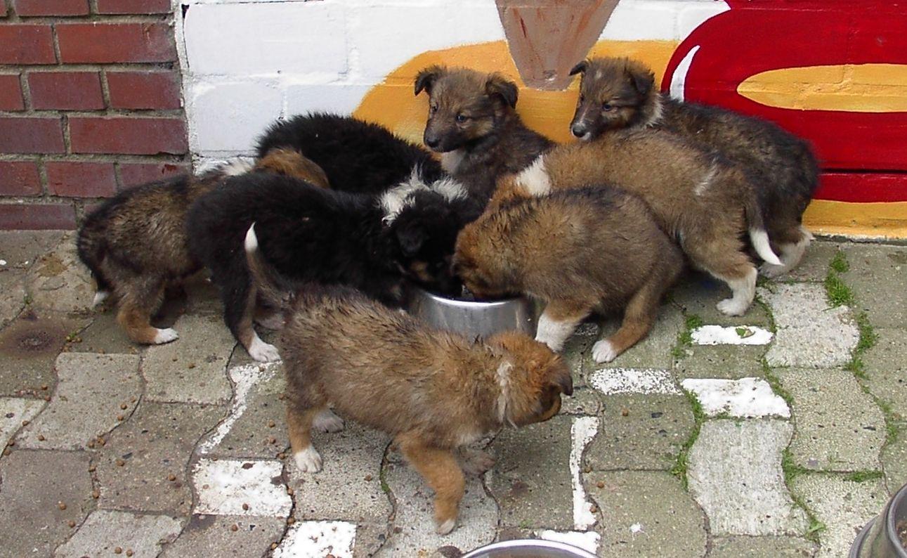 Hundewelpen erleben Höllenqualen nun das Happy End Pet