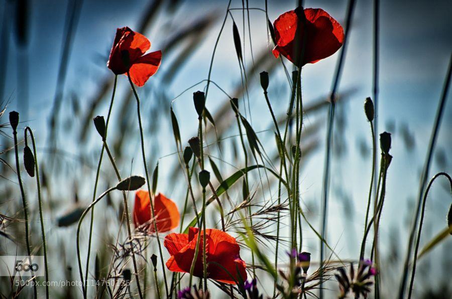Flowers by onorinofox #nature