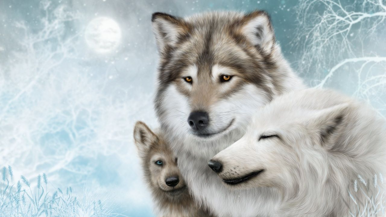 Petition to Save the Wolves: http://ln.is/n86Gt  Because We Love Wolves.