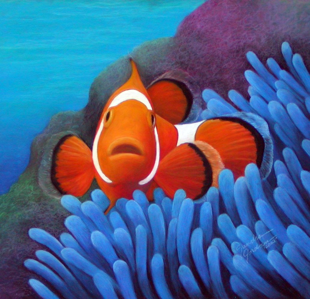Clown Fish Wallpaper - WallpaperSafari | Android | Pinterest | Fish ...