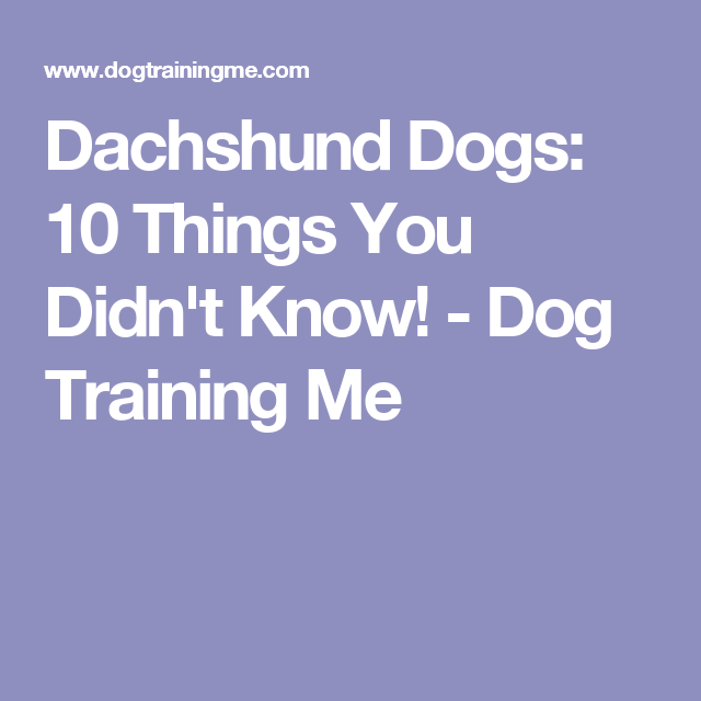 Dachshund Dogs: 10 Things You Didn't Know! - Dog Training Me
