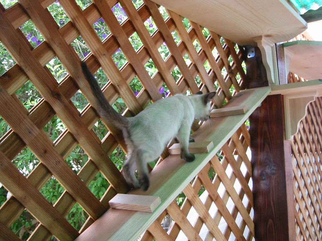 Pinner Stated Quot Our Catio Is So Fun Quot Catio I Like