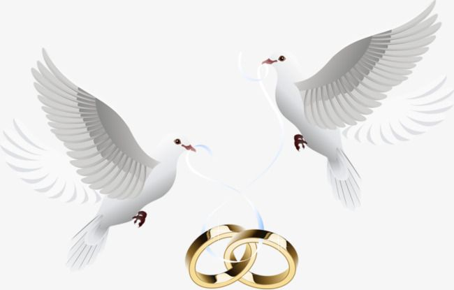 Dove Inlay Ring Ring Pigeon Feige Png Transparent Clipart Image And Psd File For Free Download Wedding Doves Tattoo Wedding Rings Perfect Wedding Venue