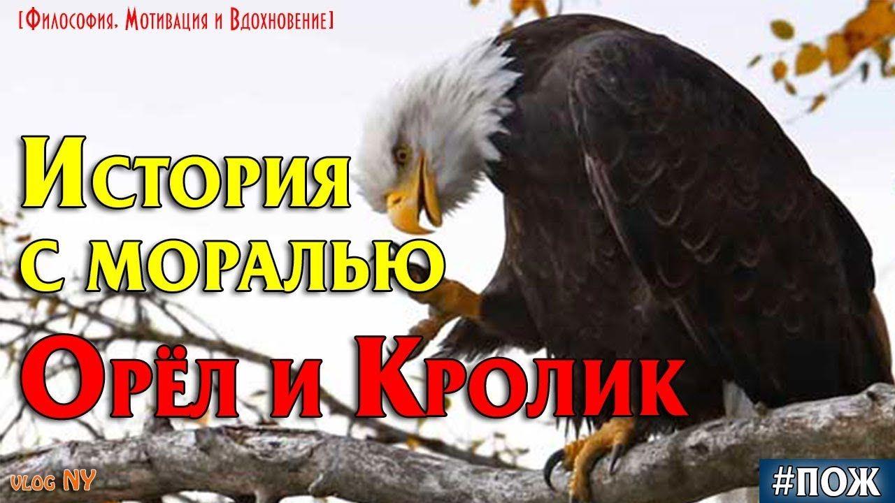 ОРЕЛ и КРОЛИК. История с моралью, которая учит. | Eagle ...