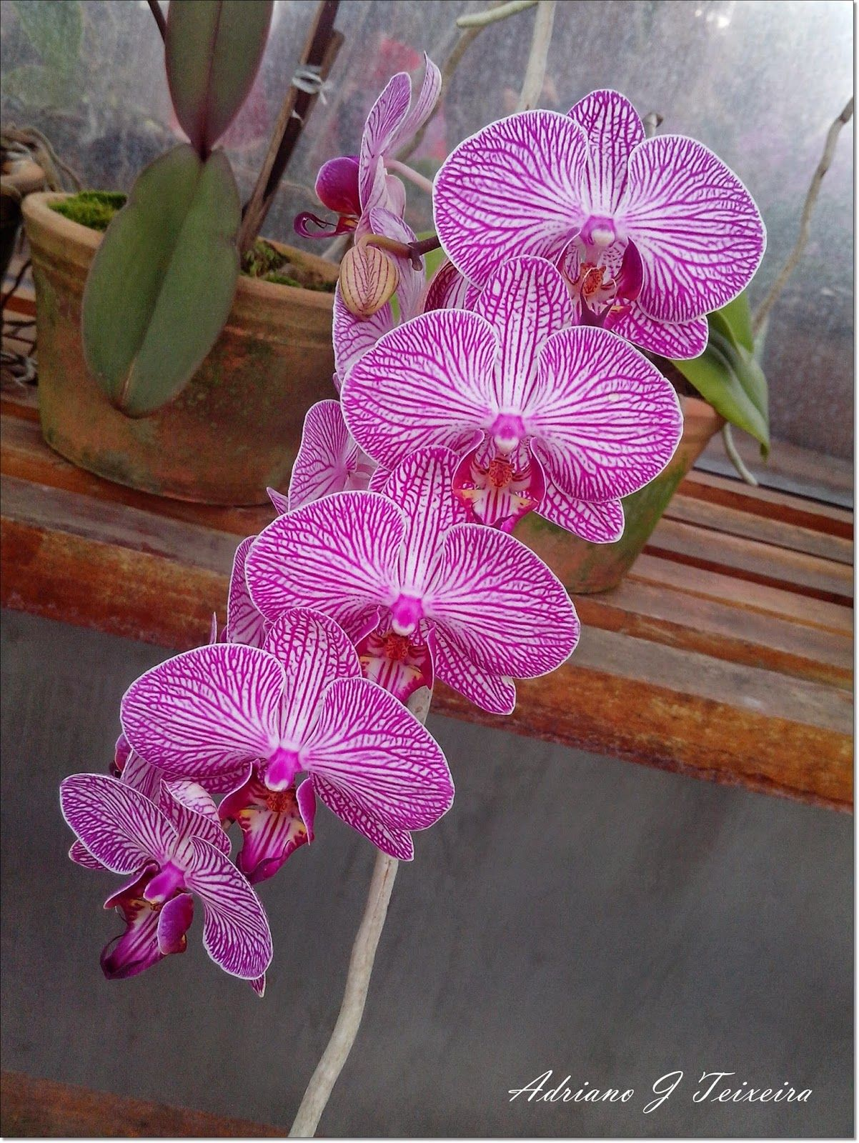 Mundo das Plantas : Orquídeas