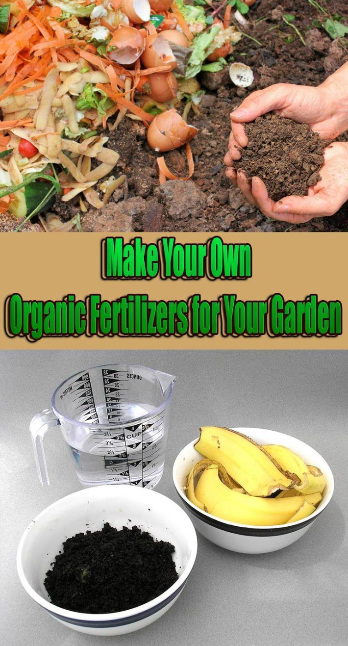 Make Your Own Organic Fertilizers for Your Garden is part of Big garden How To Make - Why wouldn't you make your own organic fertilizers for your garden, instead of buying expensive specialty products  That having been said, plants need a lot of other nutrients as well, called Micronutrients  Some of these include Magnesium, Calcium and Sulfur  It is easy, it is healthy for both