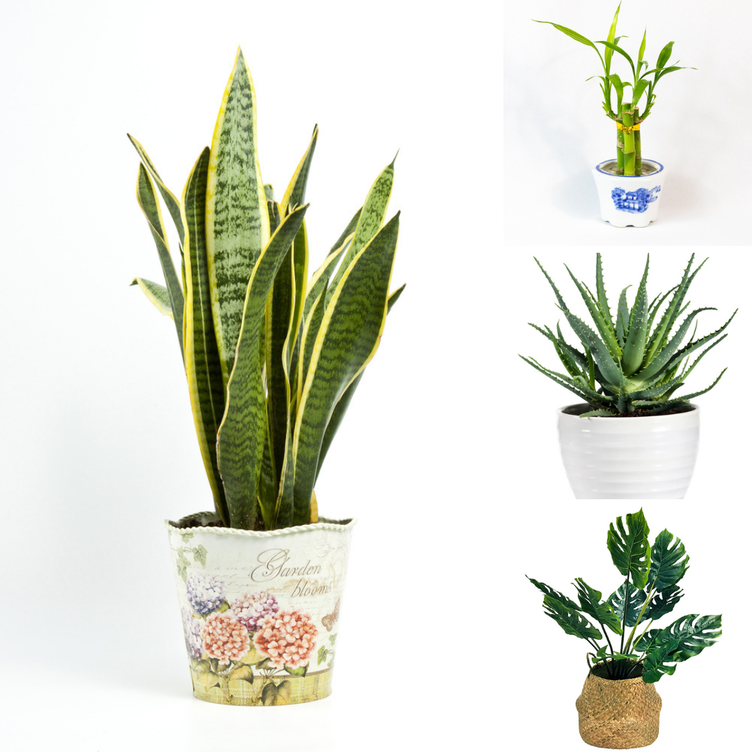 Indoor plants are a great way to style up any setting. It's an easy way to bring color to your décor and freshen up the setting instantly. Artificial greenery has the ability to set a relaxing tone in any interior design and make it just so enjoyable and dramatic. #biophilicdesign #biophilia #biophilicinteriors #biophilic #silkplants #indoorplants #artificialplants #fauxplants #officeplants #officeinterior #interiordesigner #landscapearchitecture #modernoffice #designinspiration