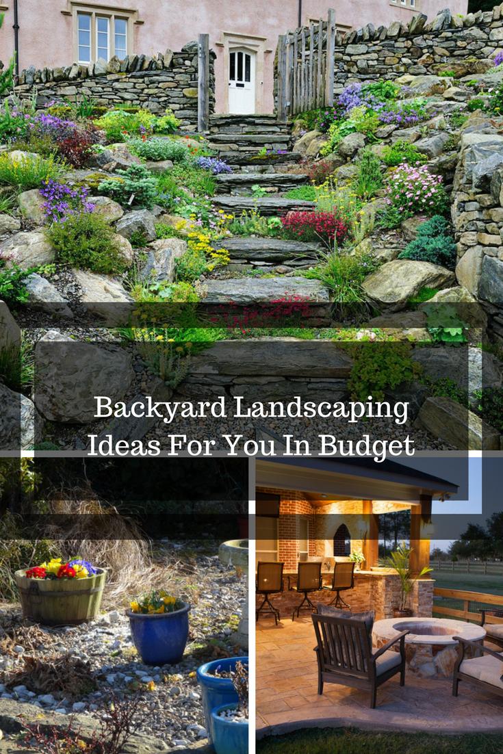 11+ Backyard ground cover ideas ideas