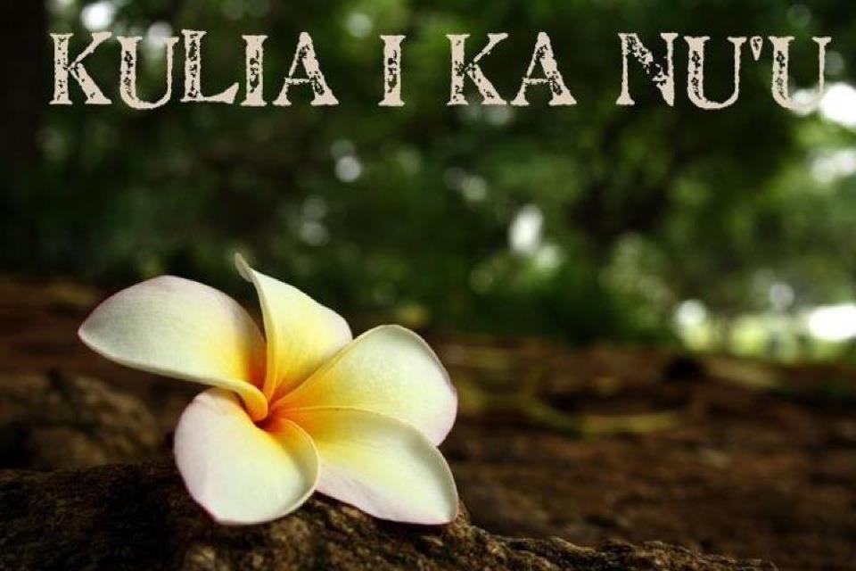 Kulia I Ka Nuu Strive For The Highest Plumeria Flowers Photography Flower Aesthetic