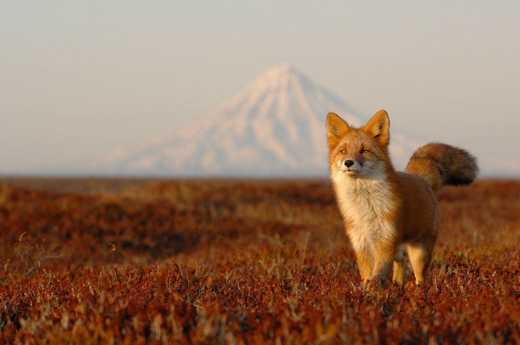 Фотограф Игорь Шпиленок - защитник дикой природы