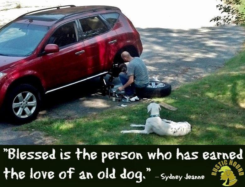 A boy & his HOUND! rescue adopt Hound, Old dogs, Adoption