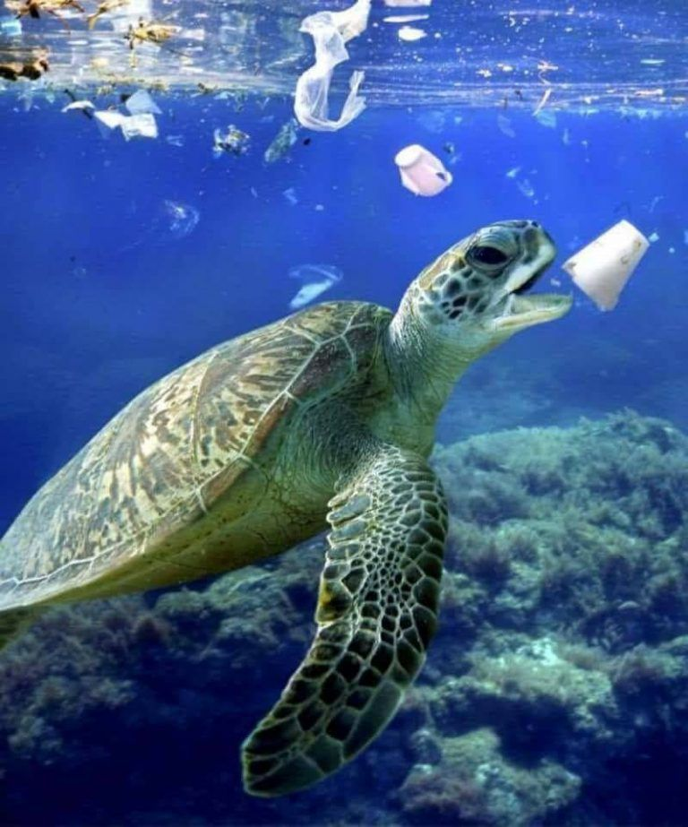 Image result for turtle pollution