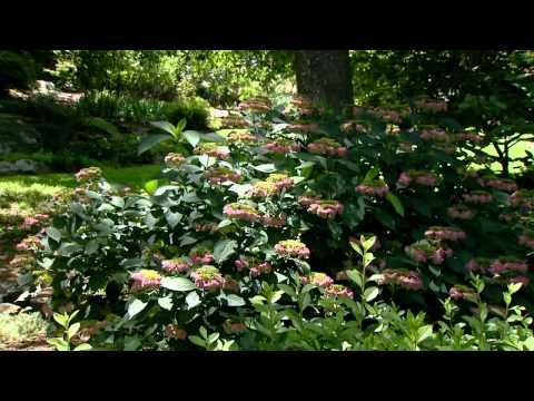 Oklahoma Wooded Strolling Garden Garden Flower Garden Plants