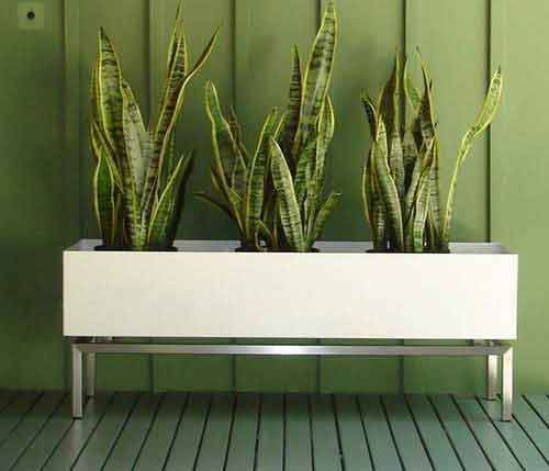 Modern planter box. I like the mother-in-law\'s tongue plant and ...