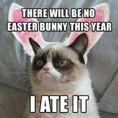 No Easter says Grumpy Cat 5