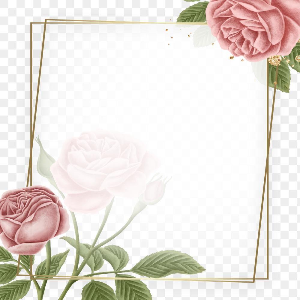Red Rose Frame Transparent Png Premium Image By Rawpixel Com Noon Rose Frame Flower Frame Red Roses