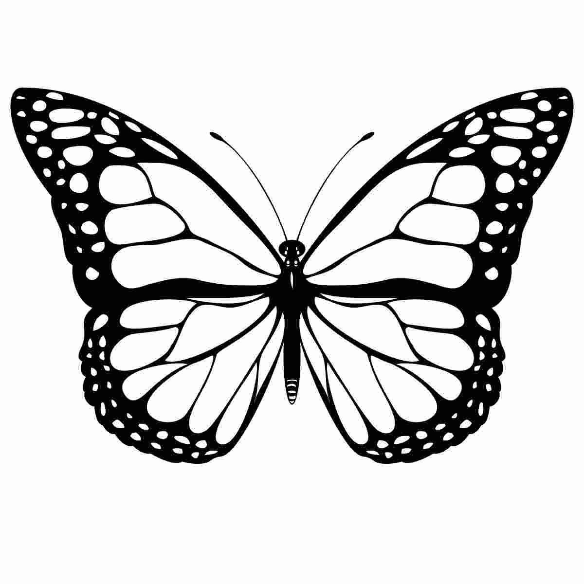 Kleurplaten Vlinders Vlinder Tekening Monarch Vlinder Tattoo Tatoeage Stencils