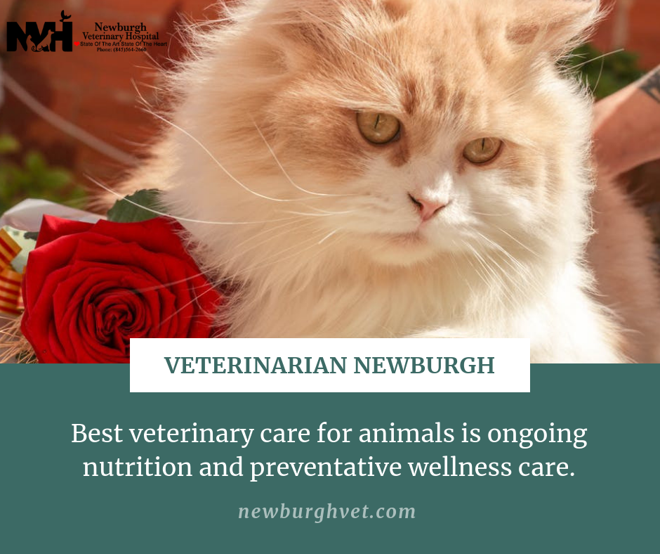 The best veterinary care for animals is ongoing nutrition