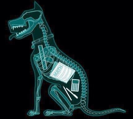 Radiografia Del Perro De Un Estudiante De La Eso Perros Humor Matematico Jashin