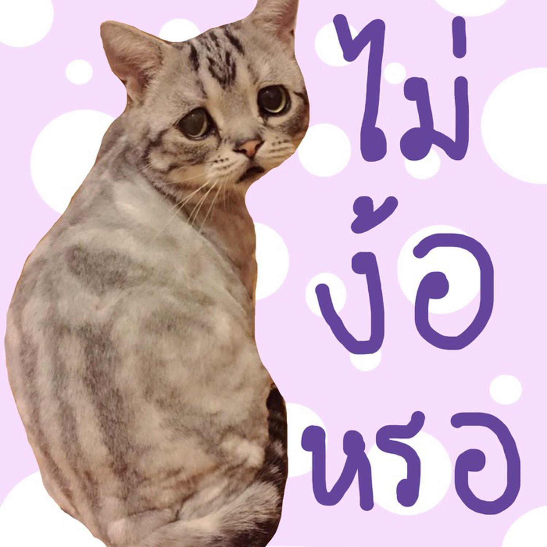 ม มแมว ร ปแมวขำๆ ม มตลกๆ ภาพส ตว ตลกๆ