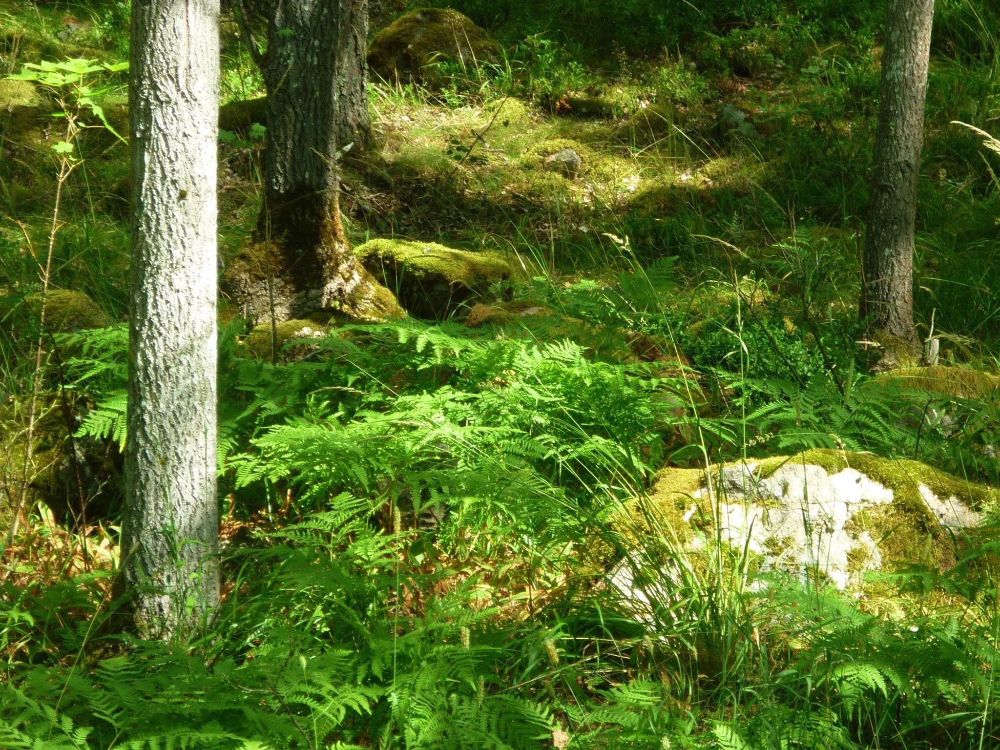 Hier wären wir jetzt gerne: Auf einer sommerlichen Lichtung mitten im Wald.