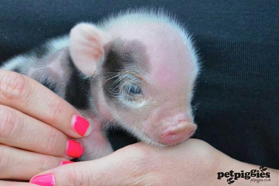Piggin handful